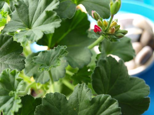 Garden7_500