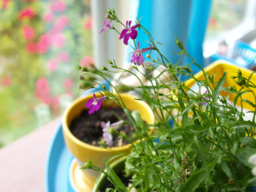 Garden3_500