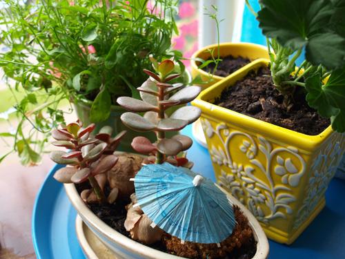 Garden5_500