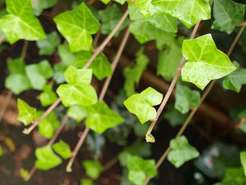 Nature15_500