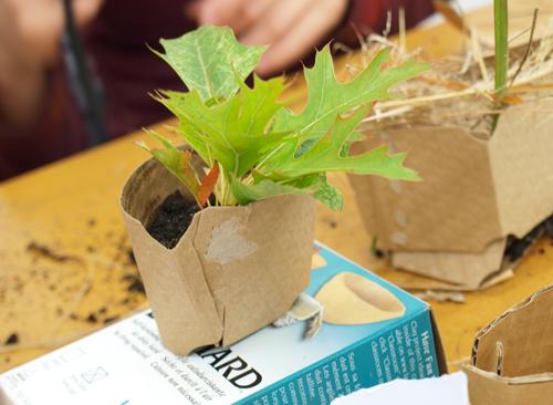 Planter1_500